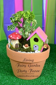 Living Fairy Garden Party Favor - Lady Behind The Curtain